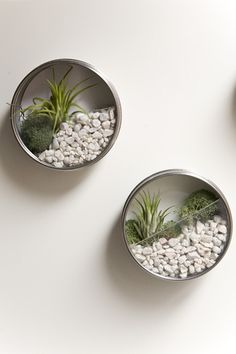 DIY Secret Garden by I bet those magnetic spice tins that ikea sells would work great for this project, they have clear acrylic windows on the lid that a dremmel blade would cut very nicely! guiademanualidades: Made with recycled cans. #Wall_Garden #DIY #guiademanualidades
