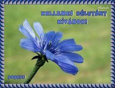 Kellemes délutánt! Herbs, Plants, Herb, Plant, Planets, Medicinal Plants