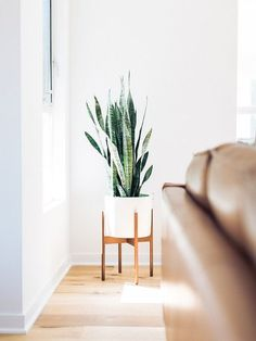 The Case Study Planter is a nod back to pottery design in the early 50's, with clean lines, simplicity, and a fresh, modern look. A cactus or leafy plant suits this stand perfectly, and it can be feat