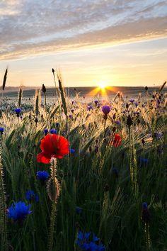 miqueridaladybug via countrywisher -Source: sublim-ature: Warmia, Poland - Peter Gray   500px.com