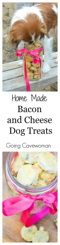 Home Made Bacon and Cheese Dog Treats - Easy to make at home, gluten free bacon and cheese dog treats. Follow The Cavewoman for more delicious gluten free recipes. http://www.goingcavewoman.com/home-made-bacon-and-cheese-dog-treats #DogTreats #DogBiscuit
