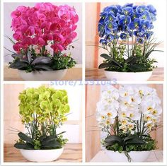 100PCS orchid-seed FLOWER seeds for home garden Phalaenopsis orchid seeds buy-direct-from-china orquidea semente  #vintage #theoldjunktrunk #fashion #Gifts