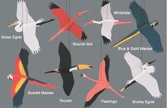 tropical birds mobile