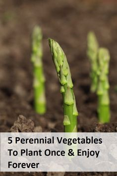 5 Perennial Vegetables To Plant Once And Enjoy Forever