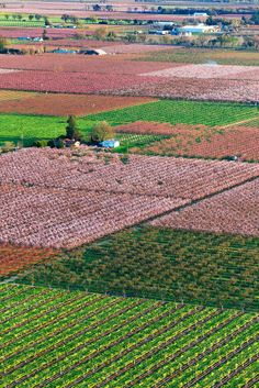 Blooming Peach Orchards in the Sacramento Valley
