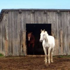 A simple horse shelter