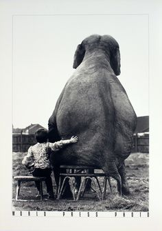 My Pal the Elephant Art Print at AllPosters.com