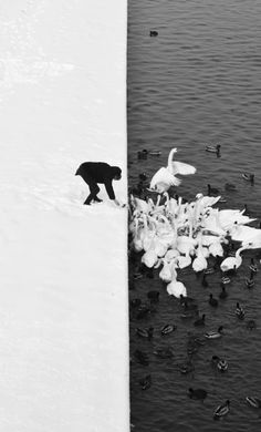 Marcin Ryczek - Man Feeding Swans (Detail), 2013