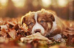Heartwarming Dog Portraits By Polish Photographer Alicja Zmyslowska | Bored Panda
