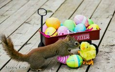 Easter Squirrel