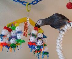 Parrot toys, Pet Bird Toys, Pet bird accessories, bird foot toys, parrot play toys, African Grey toys, parrot activity toys, bird cage toys, busy beak toys, large bird toys, medium bird toys, small bird toys, hanging bird toys, wood bird toys, bird safe toys, custom made bird toys,avian baubles