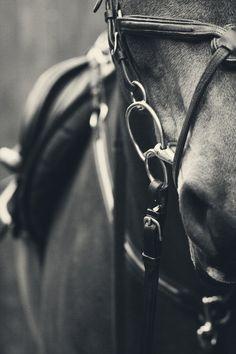 <3 #horse