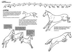 Horse Jumping Tutorial by sketcherjak on DeviantArt Horse Drawings, Animal Drawings, Art Drawings, Horse Anatomy, Animal Sketches, Equine Art, Horse Art, Drawing Techniques, Drawing Reference