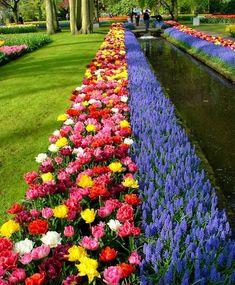 The Magic Carpet Tulip Mixture - Modern Garden Front Of House, Lawn And Garden, Tulips Garden, Planting Flowers, Beautiful Flowers Garden, Beautiful Gardens, Flower Garden Design, Flower Bed Designs, Garden Cottage