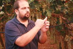 Giampiero Melillo racconta le tipologie di uva dei nostri vigneti