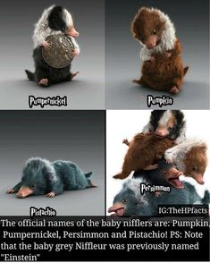 The baby Nifflers have names! Check out my giveaway post for your chance to win … The baby Nifflers have names! Check out my giveaway post for your chance to win one! Harry Potter World, Mundo Harry Potter, Harry Potter Universal, Harry Potter Fandom, Harry Potter Memes, Harry Potter Love, Pokemon, Color Names Baby, Baby Names