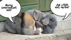 These are  2 of my rabbits...