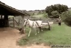 The horse is expert in parking | Gif Finder – Find and Share funny animated gifs