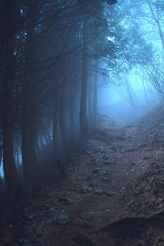I want to walk amongst these trees...