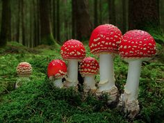 The Mystical World of Mushrooms - Album on Imgur