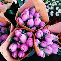 Imagem de flowers, tulips, and purple May Flowers, Fresh Flowers, Beautiful Flowers, Pink Flowers, Pink Roses, Prettiest Flowers, Lavender Roses, Tea Roses, Exotic Flowers
