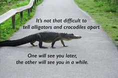 See you later alligator, after while crocodile...