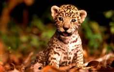 cute baby wild animals wallpapers - Google Search