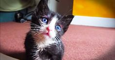It Looks Like An Adorable Kitten, But It's Really A Secret Weapon Against Stress! So. Stinky. CUTE! *** THIS IS ONE OF THE SWEETEST VIDEOS YOU WILL SEE OF A KITTY, IT'S BEAUTIFUL, FOR REAL <3 SONG IS SO PRETTY TOO PLEASE LISTEN & LOOK!!? ***