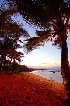 All you need to know before you take a trip to Maui