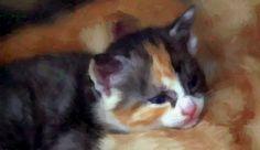 https://flic.kr/p/RqT4E1 | Kitten paint edit ®®