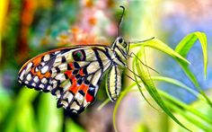 The ever new collection of beautiful butterfly desktop background wallpaper Types Of Butterflies, Flying Flowers, Background Images Wallpapers, Wallpaper Backgrounds, Car Wallpapers, Bokeh, Most Beautiful Butterfly, Blue Drawings, Nature Music