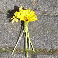 Blumenkranz Beginn
