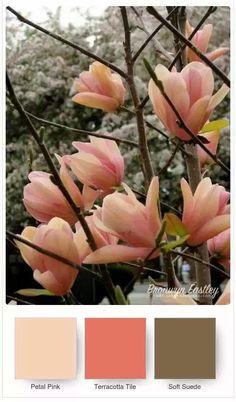 Good Morning Magnolia – Stampin' Up! Colour Pallette, Colour Schemes, Color Combos, Beautiful Color Combinations, Flor Magnolia, Magnolia Colors, Color Balance, Balance Design, Design Seeds