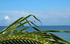 Dragonflies morning. #palm #tree #mexico #blue #ocean #sea #green #leaves
