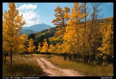 Great Sand Dunes Fall Colors | Medano primitive road surrounded by trees in autumn color. Great Sand ...