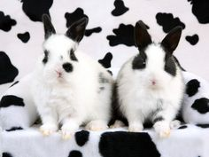 spotted rabbits birds wallpapers