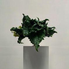 Lisa Cooper, Ikebana Sogetsu, Winter Painting, Flower Art, Floral Arrangements, Plant Leaves, Art Photography, Floral Design, Bloom