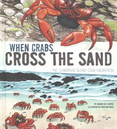 When Crabs Cross the Sand: The Christmas