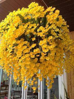 Container Gardening Flowers Full Sun - New ideas Outdoor Plants, Garden Plants, Outdoor Gardens, Orchids Garden, Plants Indoor, Exotic Flowers, Yellow Flowers, Beautiful Flowers, Yellow Orchid