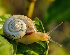 Slak, Slak Shell, Traag, Dierlijke, Natuur