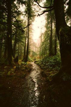 Forest, Landscape, Forest, Trees, Woods, Sunrise #forest, #landscape, #forest, #trees, #woods, #sunrise