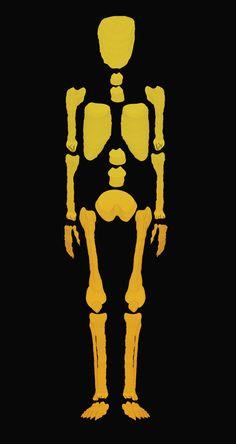 Bones / Print Illustration in Illustration