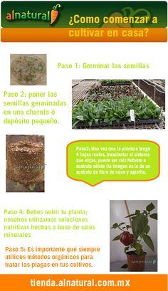 Como reproducir romero por esqueje youtube sembrar for Cultivar vegetales en casa