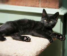 Black Cats & Kittens Appeal - RSPCA Stourbridge & District Branch