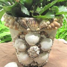 shell encrusted pot