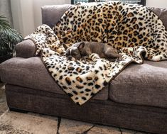 PupProtector ™ Waterproof Dog Blanket For Couch - Cheetah Faux Print – Paw.com White Throw Blanket, Dog Throw, Best Orthopedic Dog Bed, Animal Print Bedding, Faux Fur Bedding, Cheetah Print, Couch, Sofa, Dog Beds