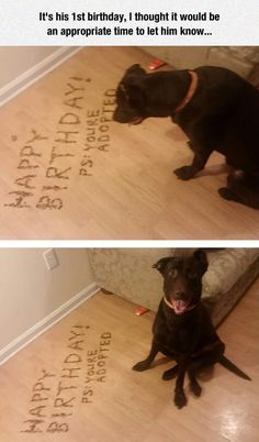 funny pictures dog birthday