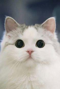Ideas Eye Black Kittens For 2019 Cute Funny Animals, Cute Baby Animals, Animals And Pets, Funny Cats, Pretty Cats, Beautiful Cats, Animals Beautiful, Cute Kittens, Black Kittens