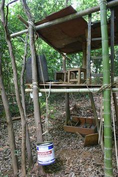 Bamboo Forest Kamakura In Search Of Pinterest Kamakura