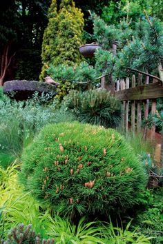 Miniatúrne ihličnany vo vašej Plants, Planters, Plant, Planting